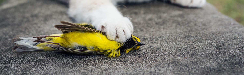 Hooded-Warbler-dead_forestpath_SS