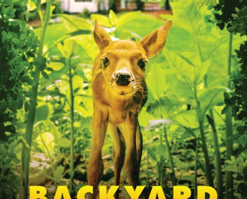 Backyard Wilderness Poster