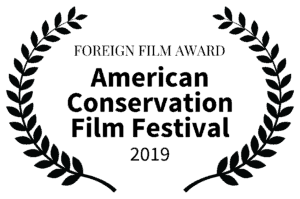 FOREIGN-FILM-AWARD-ACFF-2019