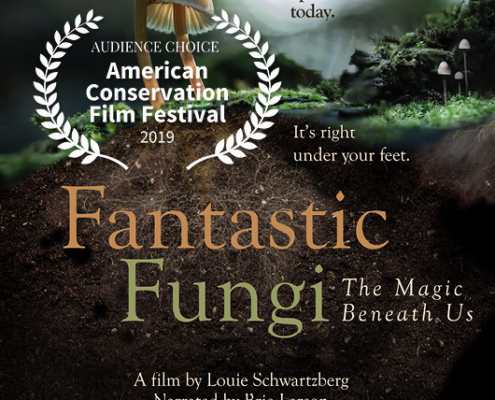 Fantastic Fungi 2019 Audience Choice Award Winner