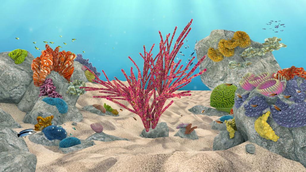 Coral Lights
