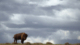 Last Wild Places - American Prairie Reserve