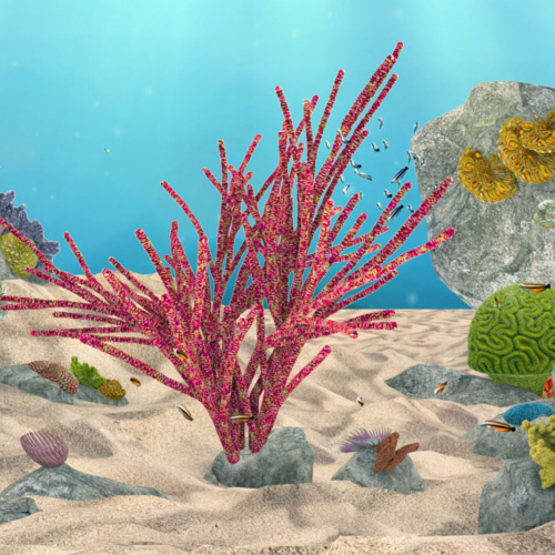 Coral-Lights_500x500